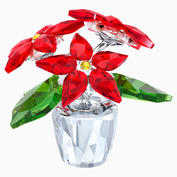 Poinsettia, small